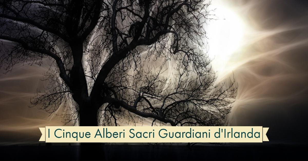 I Cinque Alberi Sacri Guardiani d'Irlanda